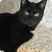 Adopt A Pet :: Pudge - Aiken, SC