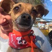 Adopt A Pet :: Bows - Encino, CA