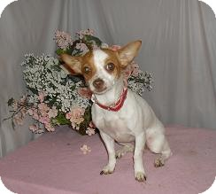 Chihuahua Dog for adoption in Chandlersville, Ohio - Princess