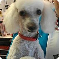 Adopt A Pet :: Prudence - Phoenix, AZ