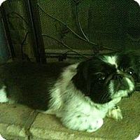 Adopt A Pet :: *Tassie (& Trickey) - Winder, GA
