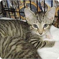Adopt A Pet :: Baby Ruth - Colmar, PA