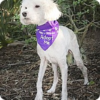 Adopt A Pet :: Duffy - North Palm Beach, FL