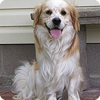 Adopt A Pet :: *The Royals - PENDING - Westport, CT