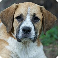 Adopt A Pet :: Jason - Providence, RI