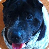 Adopt A Pet :: Petal - Barnegat Light, NJ