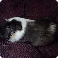 Adopt A Pet :: Theodore - San Antonio, TX