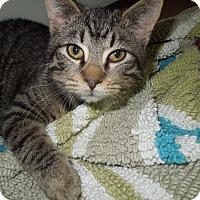 Adopt A Pet :: Wilbur - Medina, OH