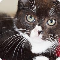 Adopt A Pet :: Romeo - Xenia, OH