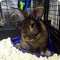 Adopt A Pet :: Sammie - Conshohocken, PA