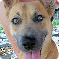 Adopt A Pet :: Gilda - Oakley, CA