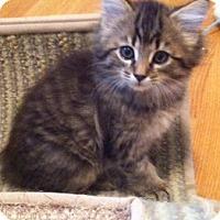 Adopt A Pet :: Dove - Chattanooga, TN