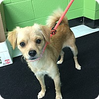 Adopt A Pet :: Laney - Nashville, TN