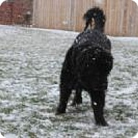 Adopt A Pet :: Marley - Howell, MI