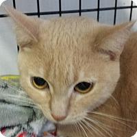 Adopt A Pet :: DORA - Phoenix, AZ