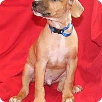 Adopt A Pet :: Gunner - Umatilla, FL