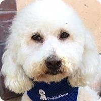 Adopt A Pet :: Benny - La Costa, CA