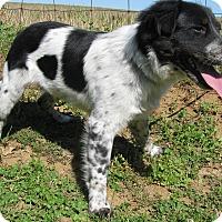 Adopt A Pet :: Nance - Bedminster, NJ