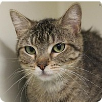 Adopt A Pet :: ADELLA-Spayed - Red Bluff, CA