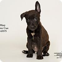 Adopt A Pet :: Mary - Baton Rouge, LA