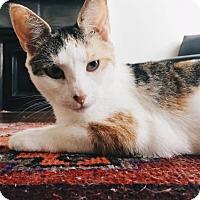 Adopt A Pet :: Dainty Janie - Love & Play! - Brooklyn, NY