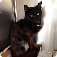 Adopt A Pet :: Scarlett - East Brunswick, NJ