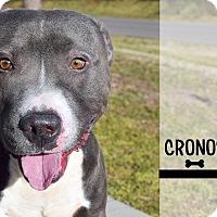 Adopt A Pet :: Cronos - Roanoke, VA