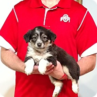 Adopt A Pet :: Champ - South Euclid, OH