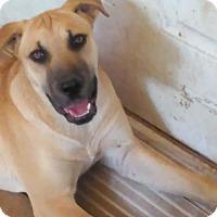Catahoula Leopard Dog Mix Dog for adoption in Sunbury, Ohio - Annie Oakley