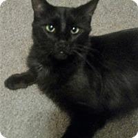 Adopt A Pet :: Fendi - Bruce Township, MI