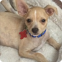 Adopt A Pet :: Hansel - Thousand Oaks, CA