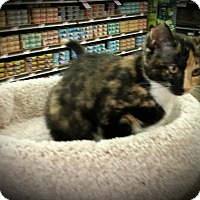 Adopt A Pet :: Samantha - Fairborn, OH
