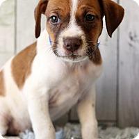 Adopt A Pet :: Mac - Waldorf, MD