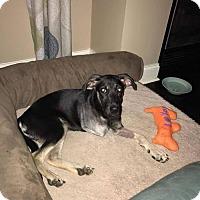 Adopt A Pet :: Jocelyn - Wedgefield, SC