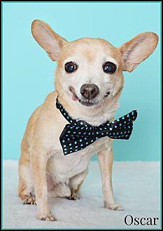 Chihuahua Mix Dog for adoption in Phoenix, Arizona - Oscar