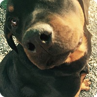 Adopt A Pet :: Cali - valley center, CA