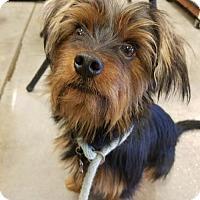 Adopt A Pet :: Mikey - Orlando, FL