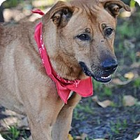 Adopt A Pet :: Boss - Loxahatchee, FL