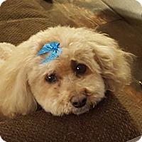 Adopt A Pet :: Nellie - Scottsdale, AZ