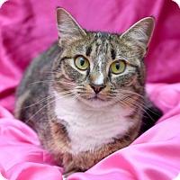 Adopt A Pet :: Harriet Tubman - Chattanooga, TN