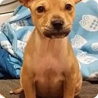 Adopt A Pet :: Ophelia - Marlton, NJ