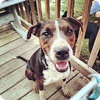 Adopt A Pet :: Mia - Austin, AR