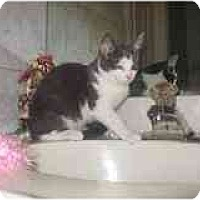 Adopt A Pet :: Marty - Catasauqua, PA
