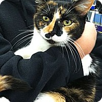 Adopt A Pet :: Patches - Riverhead, NY