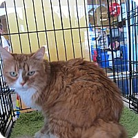 Adopt A Pet :: Garfield - Easley, SC