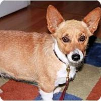 Adopt A Pet :: Sophie - Murfreesboro, TN