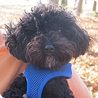 Adopt A Pet :: Kandy Kane - Kittery, ME