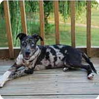 Adopt A Pet :: Kellum - Richmond, VA