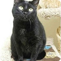 Adopt A Pet :: Sophie - Lincoln, NE