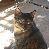 Adopt A Pet :: Tabitha - Bonsall, CA